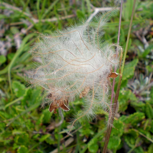 biodiverse transition year students greensod ireland educational programmes