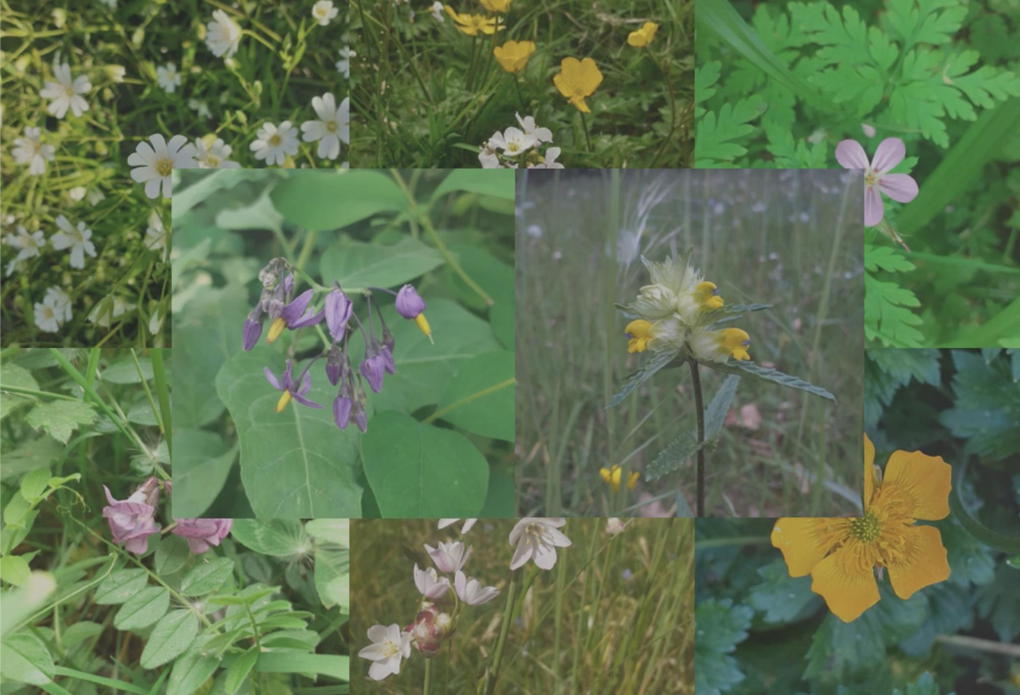Celebrating Biodiversity: In Praise of Weeds