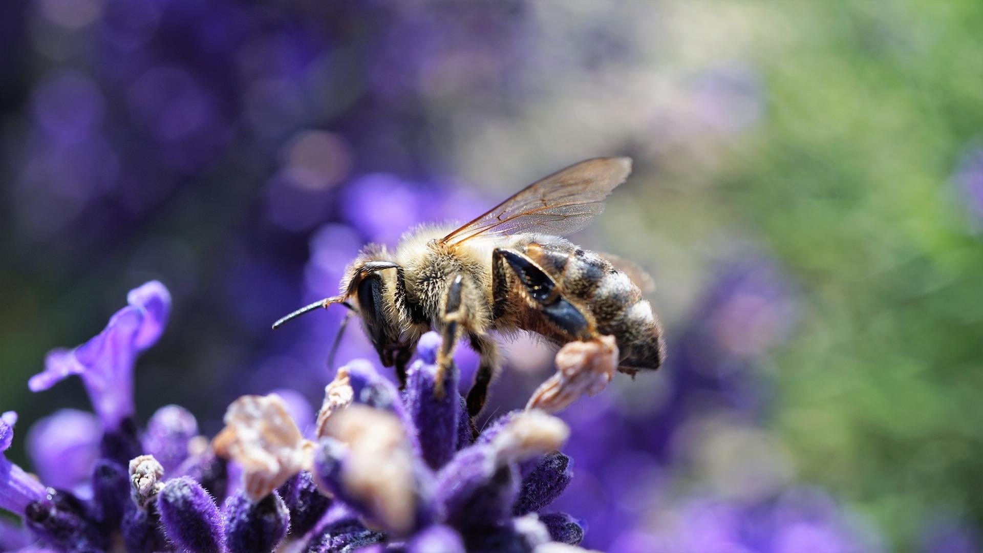 International Biodiversity Day 2020